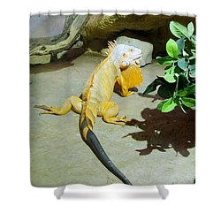 Out Of Africa Orange Lizard 2  Shower Curtain