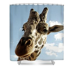 Out Of Africa  Reticulated Giraffe Shower Curtain