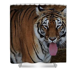 Out Of Africa  Tiger 2 Shower Curtain