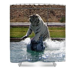 Out Of Africa Tiger Splash 1 Shower Curtain