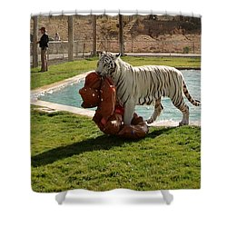 Out Of Africa Tiger Splash 2 Shower Curtain