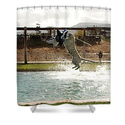 Out Of Africa Tiger Splash 7 Shower Curtain