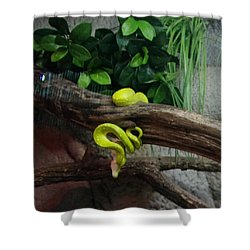 Out Of Africa Tree Snake Shower Curtain