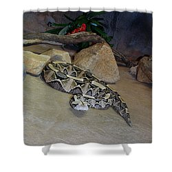 Out Of Africa Viper 2 Shower Curtain