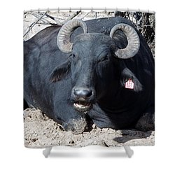 Out Of Africa  Water Buffalo Shower Curtain