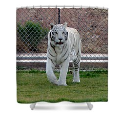 Out Of Africa White Tiger Shower Curtain