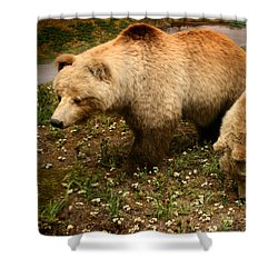 Out Of Hibernation Shower Curtain