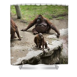 Out Of Reach Shower Curtain by Lynn Palmer