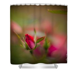 Out Of The Mist Shower Curtain by Mike Reid