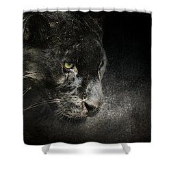 Out Of The Shadows - Wildlife - Black Leopard Shower Curtain by Jai Johnson