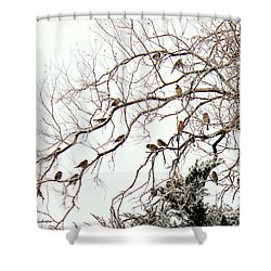 Shower Curtain featuring the photograph Out On A Limb First Snow by Barbara Chichester