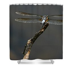 Out On A Limb Shower Curtain by Karol Livote