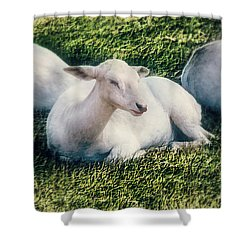 Out To Pasture Shower Curtain by Melanie Lankford Photography