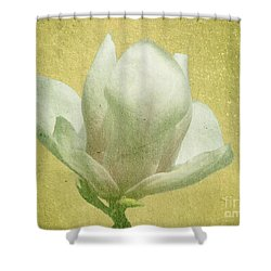 Outer Magnolia Shower Curtain by Jeff Kolker