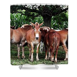 Outstanding In Your Field Shower Curtain