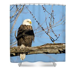 Shower Curtain featuring the photograph Overlooking Freedom by Steven Santamour