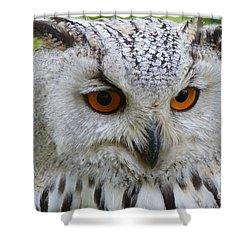 Shower Curtain featuring the photograph Owl Bird Animal Eagle Owl by Paul Fearn