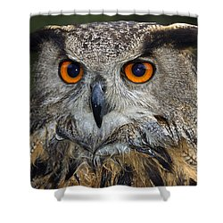 Owl Bubo Bubo Portrait Shower Curtain