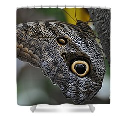 Shower Curtain featuring the photograph Owl Butterfly by Bianca Nadeau
