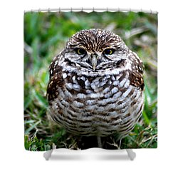 Owl. Best Photo Shower Curtain
