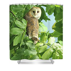 Shower Curtain featuring the photograph owl by Rod Wiens