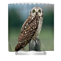 Owl See You Shower Curtain by Torbjorn Swenelius