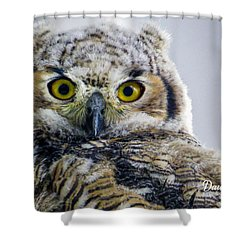 Owlet Close-up Shower Curtain