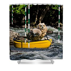 Owlets In A Canoe Shower Curtain by Les Palenik