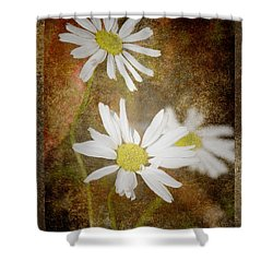 Ox Eye Dasies Shower Curtain