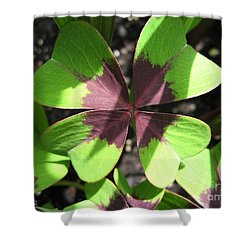 Oxalis Deppei Named Iron Cross Shower Curtain