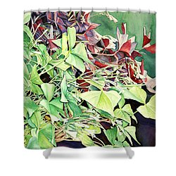 Oxalix Tangle Shower Curtain