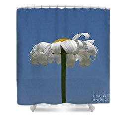 Oxeye Daisy Shower Curtain by Dee Cresswell