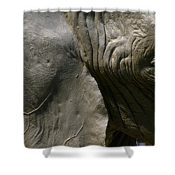 Shower Curtain featuring the photograph Pachyderm by Jennifer Wheatley Wolf