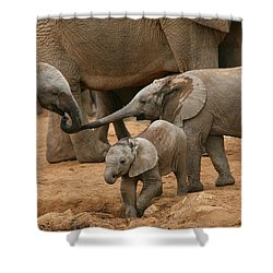 Pachyderm Pals Shower Curtain by Bruce J Robinson