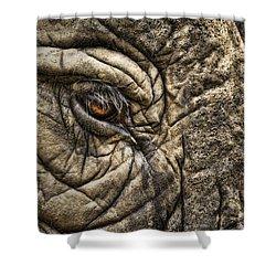 Pachyderm Skin Shower Curtain by Daniel Hagerman