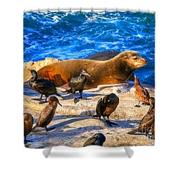 Shower Curtain featuring the photograph Pacific Harbor Seal by Jim Carrell