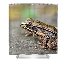 Pacific Tree Frog On A Rock Shower Curtain by David Gn