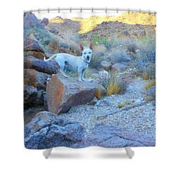Paco Shower Curtain