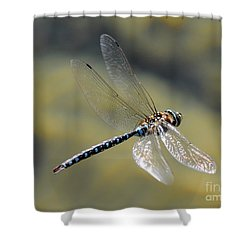 Shower Curtain featuring the photograph Paddletail Darner In Flight by Vivian Christopher