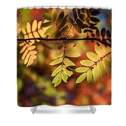 Paint  Shower Curtain by Aaron Aldrich