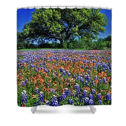 Paintbrush And Bluebonnets - Fs000057 Shower Curtain