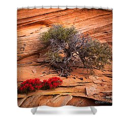 Paintbrush And Juniper Shower Curtain by Inge Johnsson
