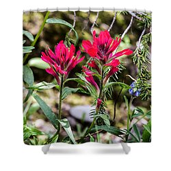Paintbrush Shower Curtain