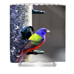 Painted Bunting - Img 9757-002 Shower Curtain
