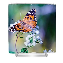 Painted Lady Butterfly 1 Shower Curtain