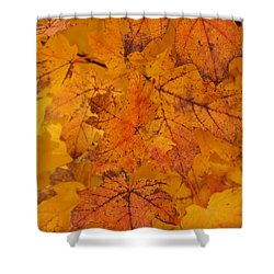 Shower Curtain featuring the photograph Painted Leaves Of Autumn by Linda Shafer
