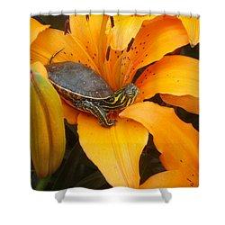 Painted Lilly Shower Curtain by James Peterson