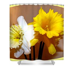 Painted Okanagan Daffodils Shower Curtain by Will Borden
