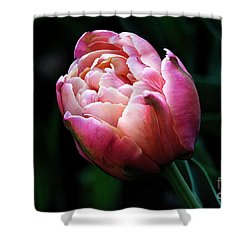 Painted Tulip Shower Curtain