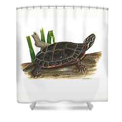 Painted Turtle Shower Curtain by Cindy Hitchcock